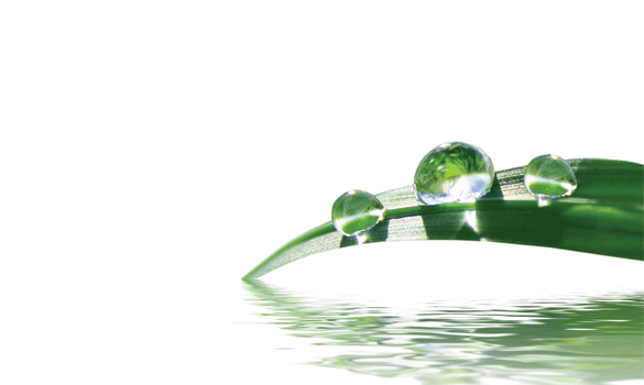 3 drops of water on a single green leaf that's hanging just above water