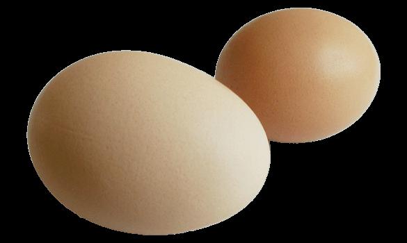 EWS_Eggs2