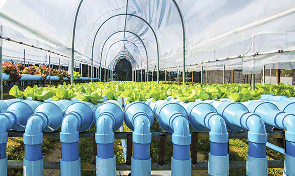 Green plants growing from blue pipes inside of a greenhouse