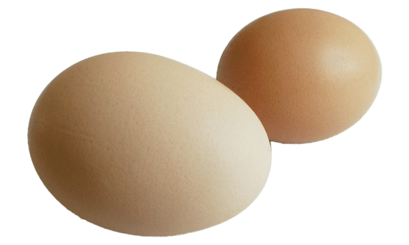 Two eggs laying next to each other
